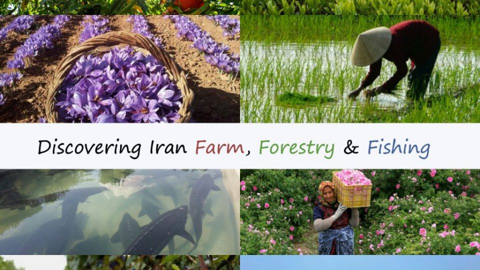 Discovering Iran Farm, Forestry & Fishing